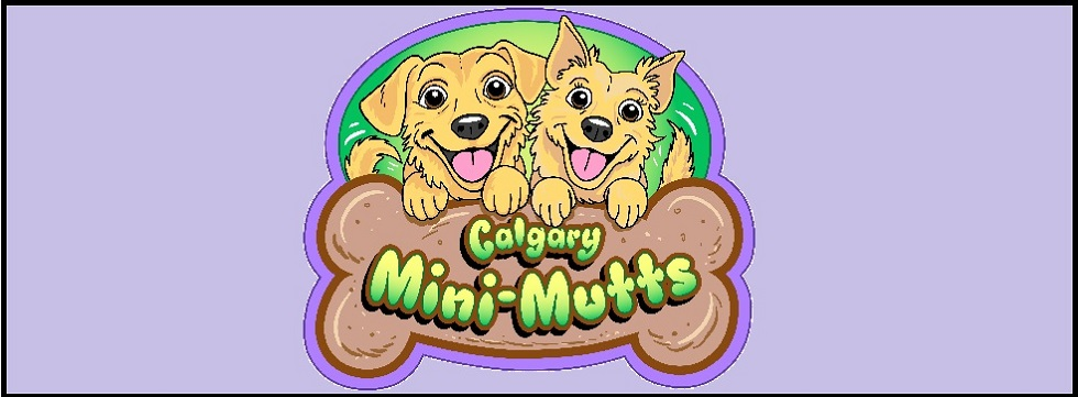 Go to www.meetup.com/MiniMuttsCalgary