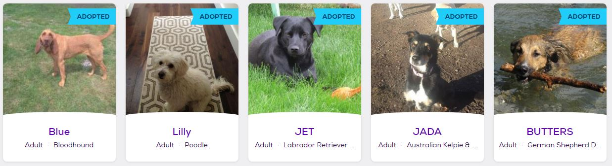 adopted3