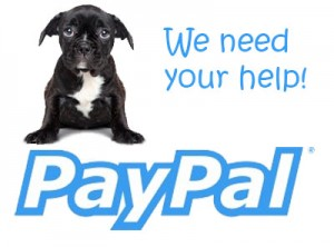 paypal need help