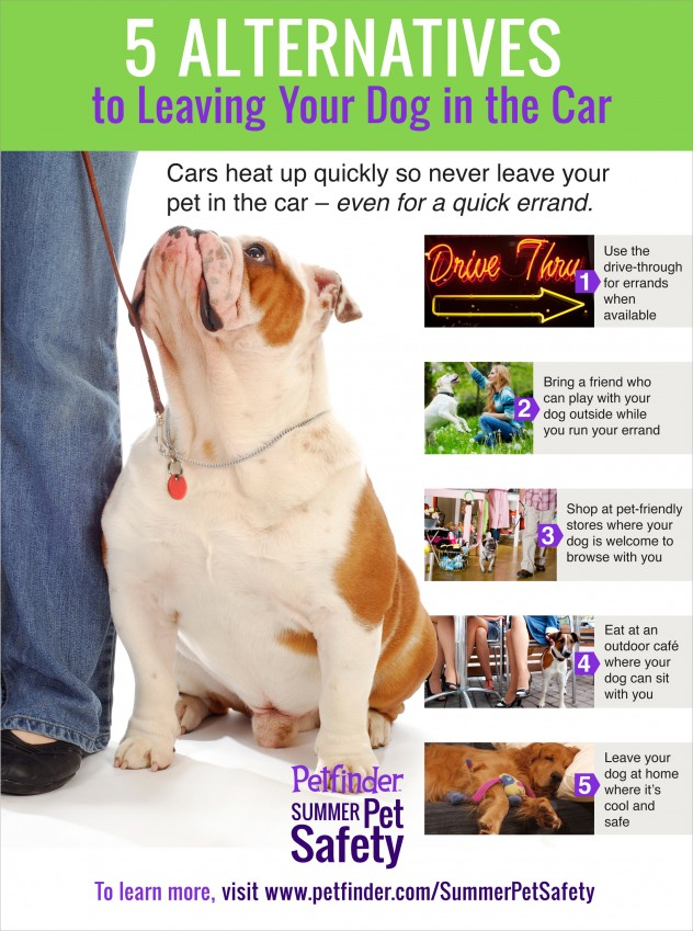 5-alternatives-to-leaving-pet-in-car-632x849