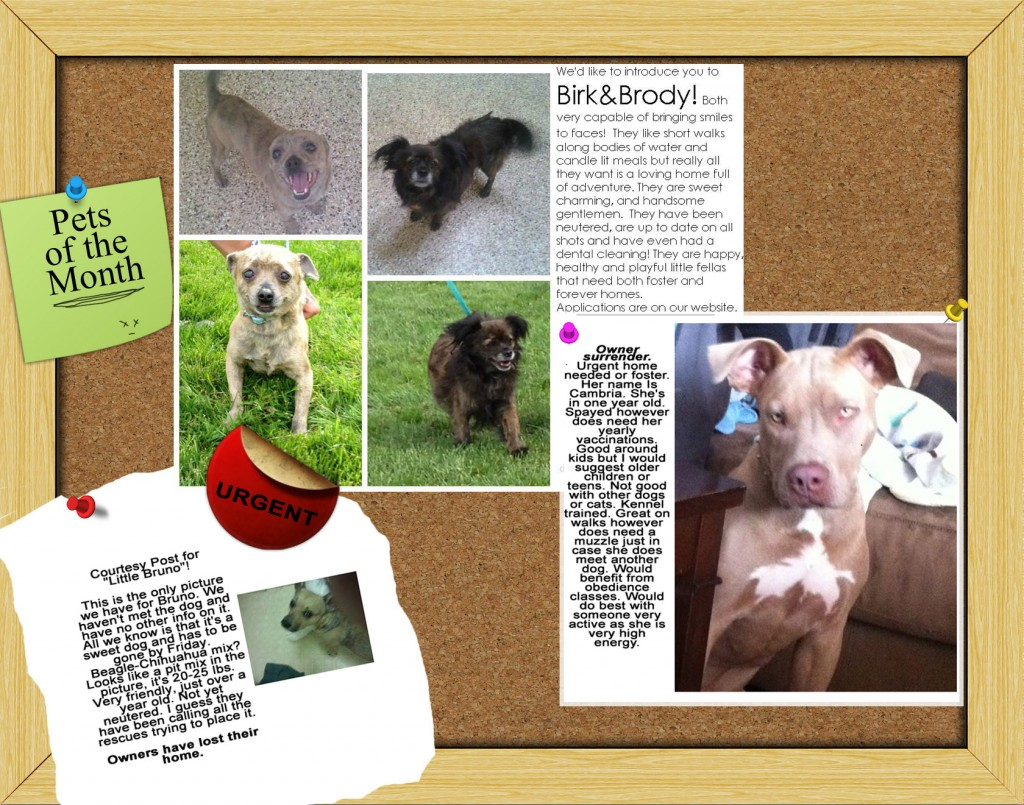 Pets of the MOnth